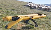 Boston Dynamics'in robot köpeği çoban oldu